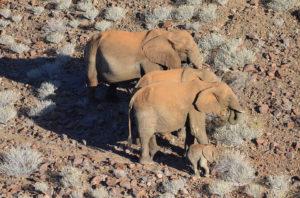 elephant namibien